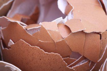 卵の殻の成分って何?化粧品や肥料に使えるってホント?
